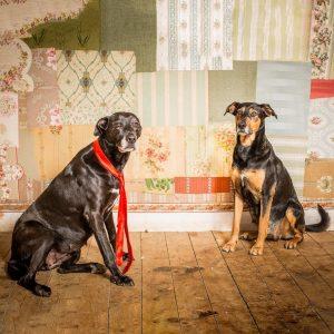 pets dog smile merci  Frida et Gadaloupe pour lahellip